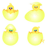 Set of chickens with eggs vector illustration