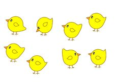 Set of chicks. A set of cute yellow chicks Stock Photo