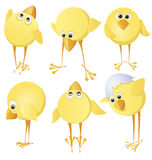 Set of chicks Stock Image