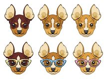 Set of chihuahua dogs head. royalty free illustration
