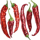 Set of chili pepper Stock Image