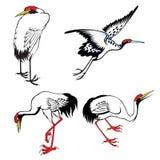 Set of chinese heron Stock Photos
