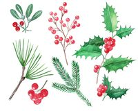 Set of Christmas elements, red berries, holly, mistletoe, hand d vector illustration