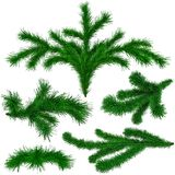 Set of Christmas green fir-tree branches Stock Photography
