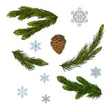 Set of Christmas and New Year decorations. Fir branches, cone and snowflakes isolated on white background. Vector illustration.  royalty free illustration