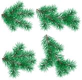 Set  Christmas tree branch for decorate Royalty Free Stock Photography