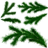 Set of Christmas tree fir branches. On white background Royalty Free Stock Image
