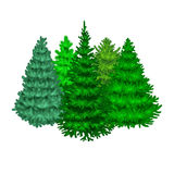 Set of christmas vector tree like fir or pine Blue spruce  Royalty Free Stock Image