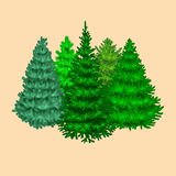 Set of christmas vector tree like fir or pine Blue spruce for New year celebration  Royalty Free Stock Photography