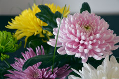 A set of Chrysanthemums. Chrysanthemums in a vase, close up Royalty Free Stock Photos