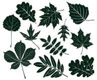 Set ciemne sylwetki liście różnorodni kształty również zwrócić corel ilustracji wektora Zdjęcie Stock
