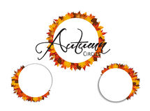 Set of circles. Autumn leaves around blank rectangles. Royalty Free Stock Photography