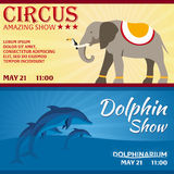 Set of Circus and dolphin show banner, circus and dolphinarium ticket. Amazing Show. Flat illustration. Set of Circus and dolphin show banner, circus and Royalty Free Stock Image