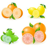 Set of citrus Royalty Free Stock Photography