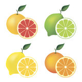 Set of citrus fruit Stock Photo