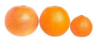 Set of citrus fruit. Royalty Free Stock Photos