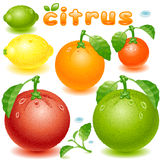 Set citrus fruit Royalty Free Stock Photos