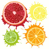 Set of citrus fruit - grapefruit, orange, lime and lemon. Hand d Royalty Free Stock Photo