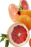 Set of citrus fruit Stock Photography