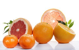 Set of citrus fruit Royalty Free Stock Image