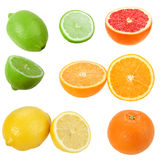 Set of citrus fruits Royalty Free Stock Photography