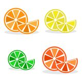 Set of citrus fruits, colorful vector royalty free illustration