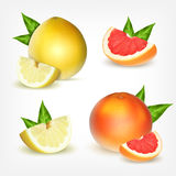 Set of citrus fruits Stock Image