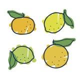 Set of citrus fruits Royalty Free Stock Photo