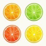 Set of citrus fruits. Orange, Lime, Grapefruit, Lemon. Royalty Free Stock Images