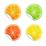 Set of citrus fruits. Orange, Lime, Grapefruit, Lemon. stock illustration