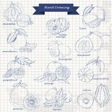 Set of citrus fruits on paper. Vector hand drawing sketch illustration Royalty Free Stock Photo