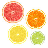 Set of citrus fruits. Vector illustrations. EPS10 Royalty Free Stock Images