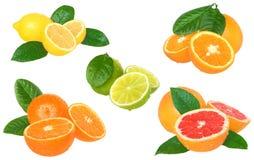 Set citrus isolated Stock Photo