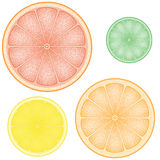 Set of citrus in the slice Stock Images