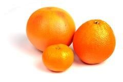 Set of citrus Royalty Free Stock Photo