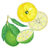 Set of citruses Stock Photography