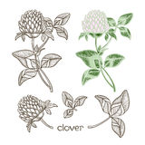 Set of clover  isolated on the white background.Sketch. Stock Photography