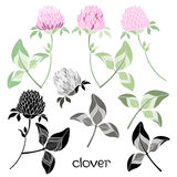Set of clover  isolated on the white background. Stock Photo