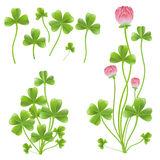 Set of clover leafs. Isolated on the white background Royalty Free Stock Image
