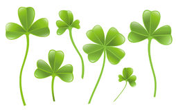 Set of clover leafs Stock Images