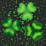 A set of clover leaves Stock Photos