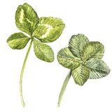 A set of clover leaves - four-leafed and trefoil. Watercolor illustration. Design element Happy Saint Patricks Day.  Stock Photos