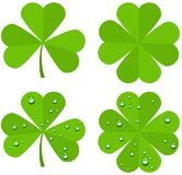 Set clover leaves isolated on white background Stock Images