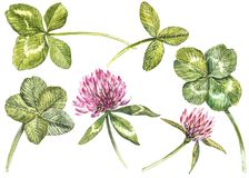A set of clover red flowers and leaves - four-leafed and trefoil. Watercolor botanical illustration. Design element. Happy Saint Patricks Day Stock Image