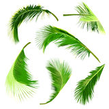Set of coconut tree leaves, collection of tropical leaves Royalty Free Stock Images