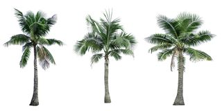 Set of coconut tree used for advertising decorative architecture. Summer and beach concept. Set of coconut tree isolated on white background used for advertising Stock Photography