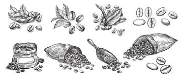 Set of coffee beans in bag. In graphic style hand-drawn vector illustration