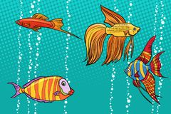 Set collection of aquarium fish. Pop art retro vector illustration Royalty Free Stock Photography