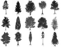 Set or collection of common trees, black Stock Photos
