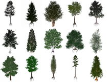 Set or collection of common trees - 3D render Stock Photo